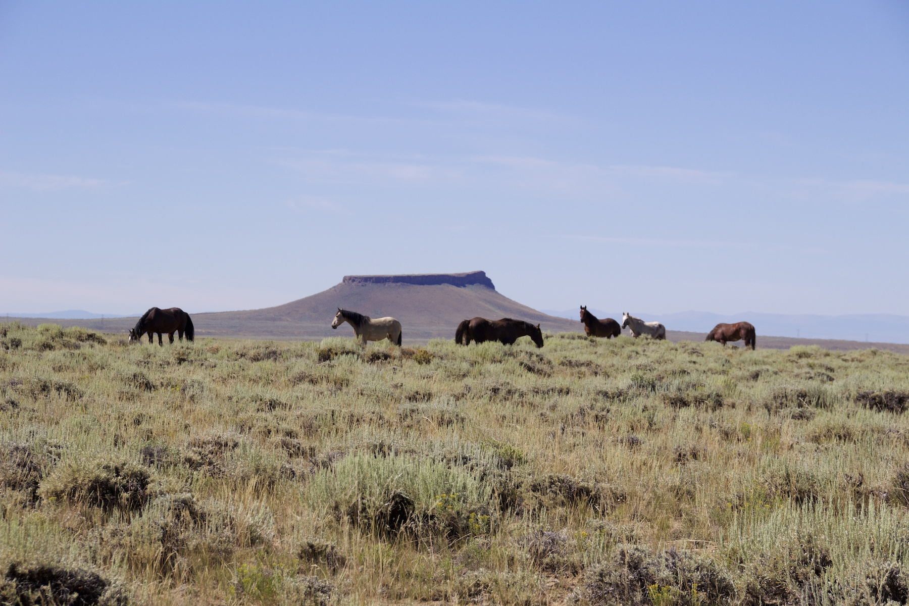 The Wild Horses of Green River, Wyoming